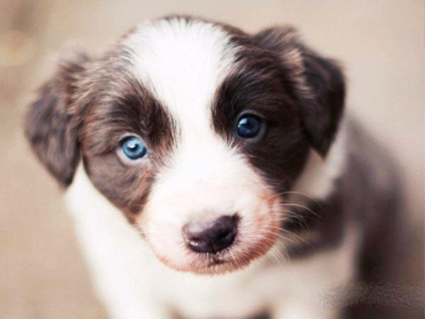 狗狗牙结石怎么预防和去除?