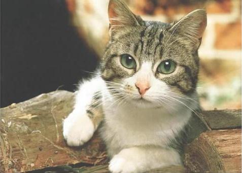 猫能吃什么人吃的东西?