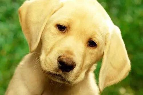 狗狗临终前的征兆有哪些?