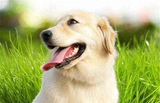 狗狗体外驱虫用什么药好?
