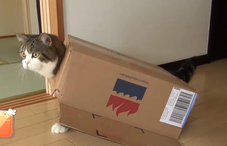 猫咪不吃东西无精打采是怎么回事?